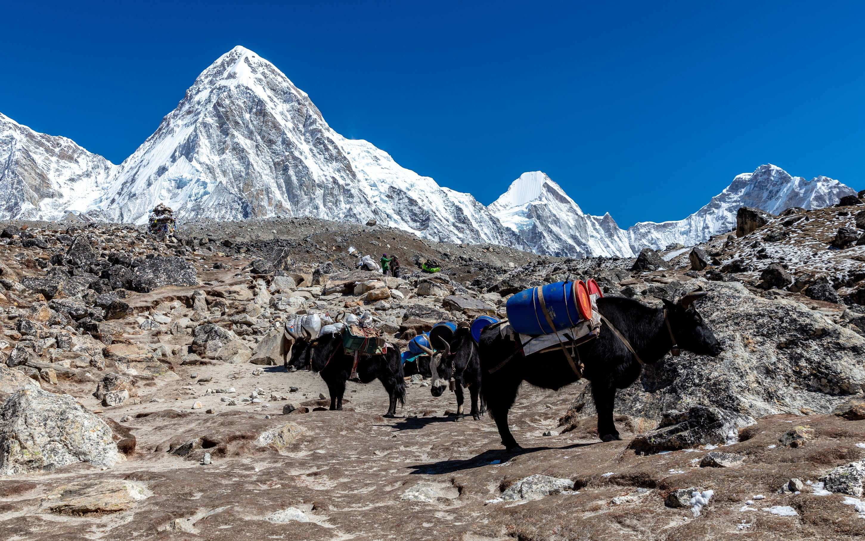 Top 7 best things to do in Nepal